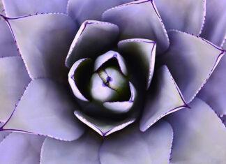 Aloesowa pielęgnacja dla każdego na lato i lata